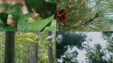 大自然动植物视频