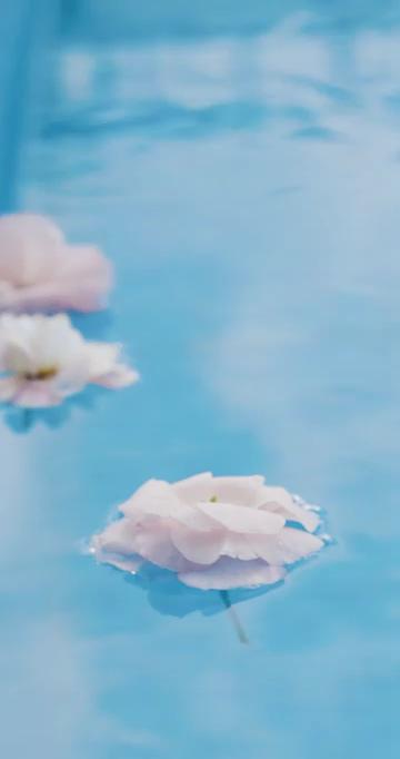 飘在水面上的花朵小清新竖屏