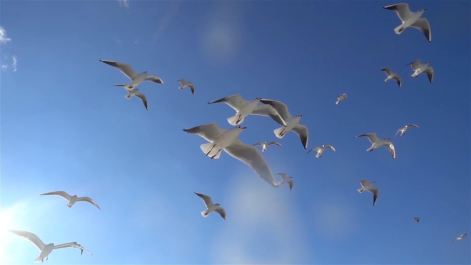 飞翔的鸟视频素材