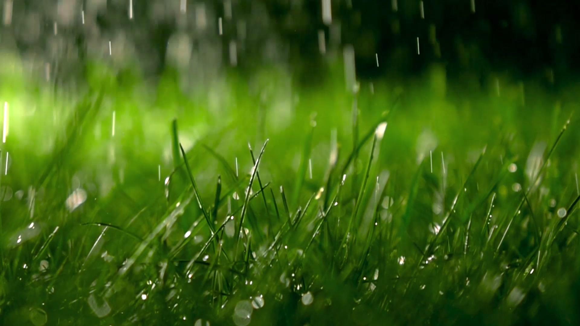 下雨草地视频素材