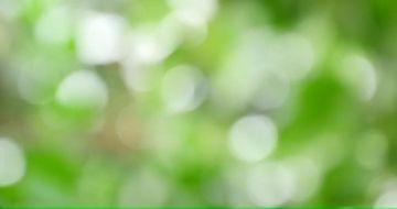 4K虚化的绿叶转场适用