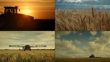 小麦收割机视频素材