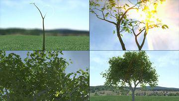 一棵树的生长动画视频素材