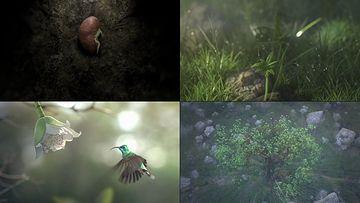 一粒种子生长成参天大树视频