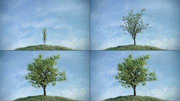 植物生长动画视频素材