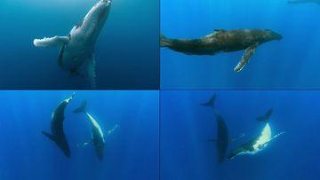 海里的鲸鱼视频素材