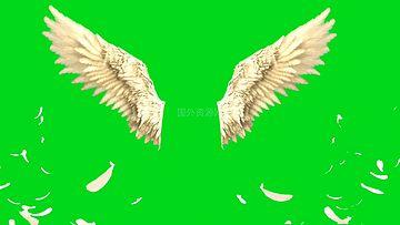 翅膀绿幕视频素材