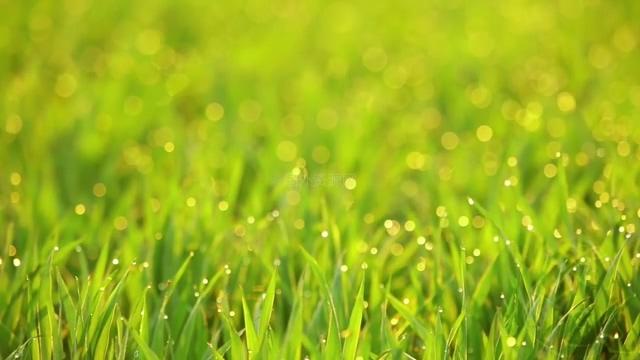 小清新的草坪晨露视频