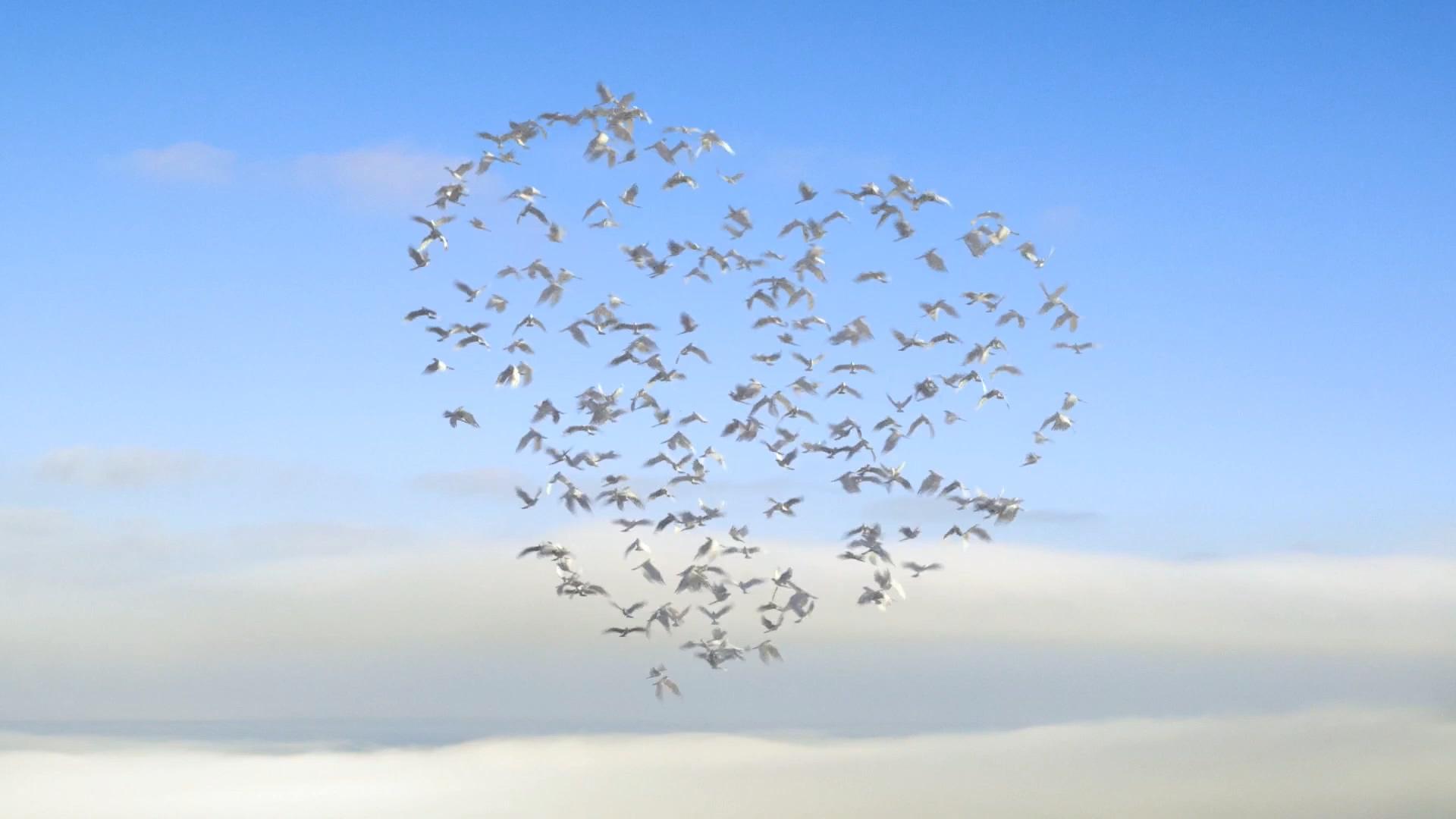 飞鸟汇聚成心形