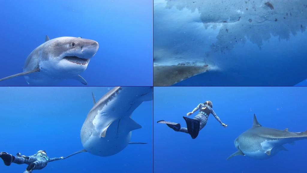 4K鲨鱼和游泳的美女视频