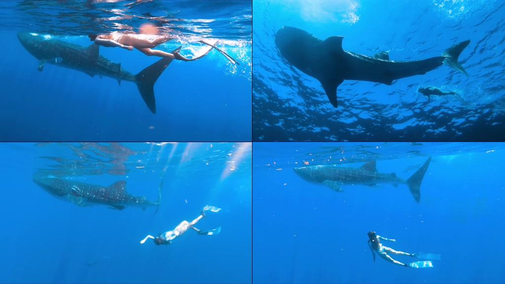 人与动物美女与大鱼视频素材