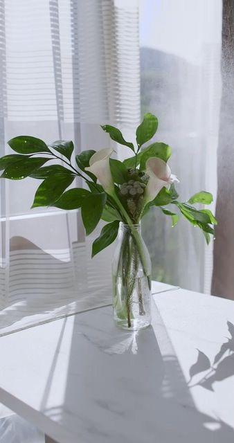 阳台上的花瓶视频素材