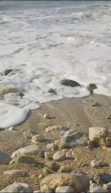 浪花游向岸边的石头