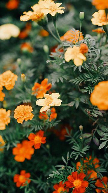 暖色的花朵竖屏视频素材