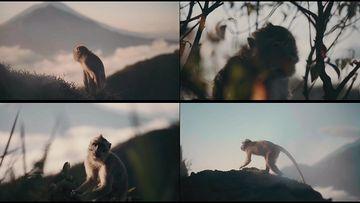 4K山顶里的一只野猴子视频