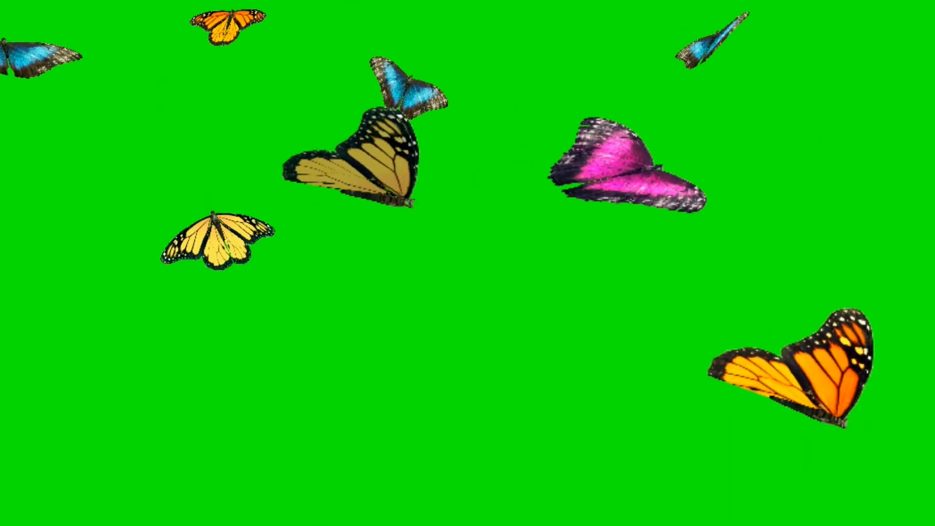 飞舞的各种颜色蝴蝶视频素材