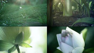 唯美的花朵绽放过程视频素材