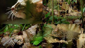 野猫视频素材