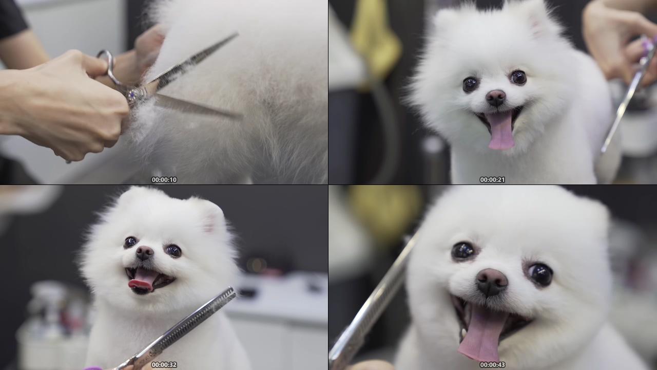 宠物店帮狗狗剪毛视频素材