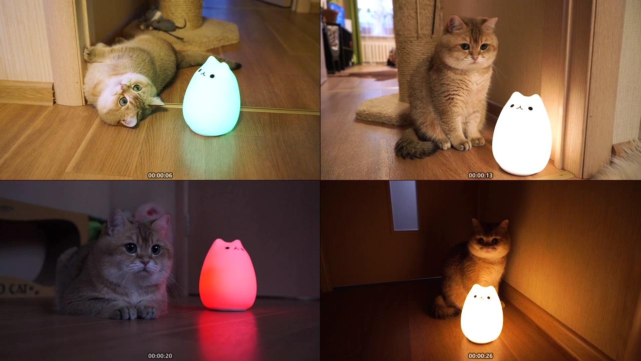 猫咪灯泡创意灯饰视频素材