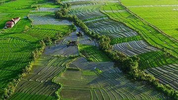 4K泰国水稻田视频素材