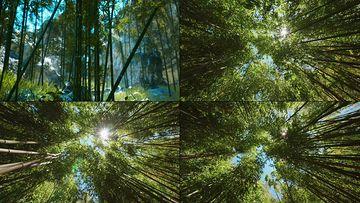 4K日本竹林视频素材