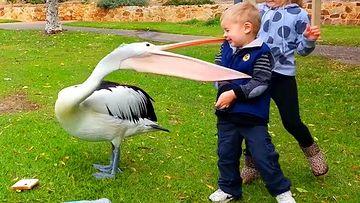 搞笑视频素材-有趣的婴儿与动物之战