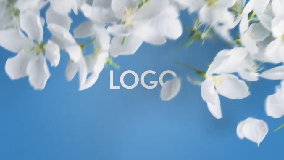 小清新春花LOGO演绎AE模板