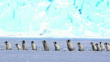 超清企鹅4K视频素材