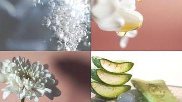 芦荟天然植物萃取护肤精华视频素材