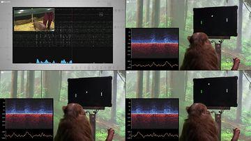 脑机接口动物实验视频素材