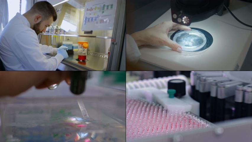 4K干细胞超清视频素材