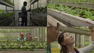 无土栽培种植蔬菜视频素材