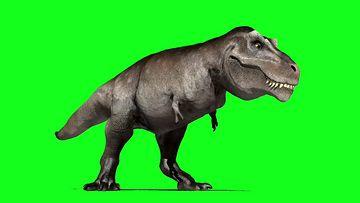 恐龙摇头视频素材