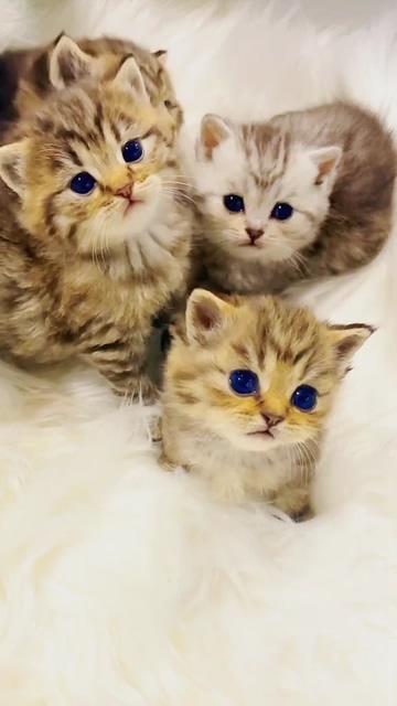 可爱的猫咪视频素材
