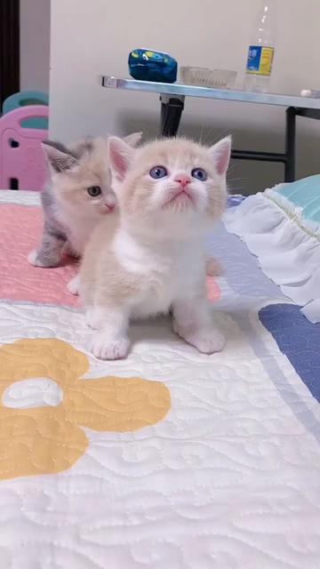 猫咪幼崽视频素材
