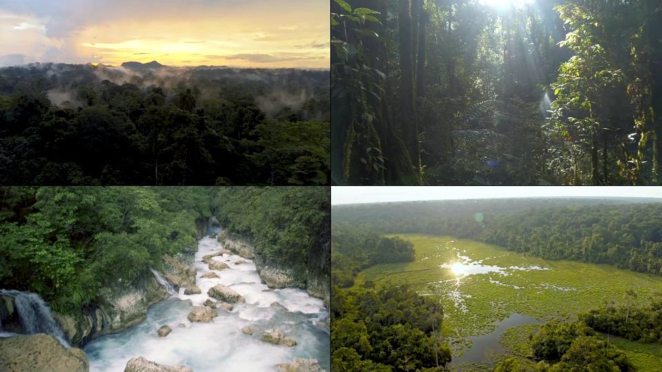自然生态大森林视频素材