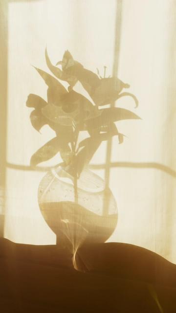 阳台上的花瓶剪影竖屏视频