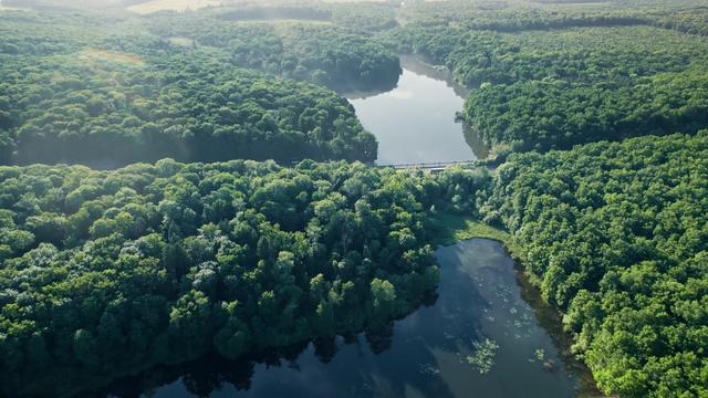 4k超清航拍大森林视频素材