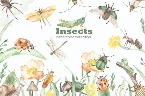 手绘水彩风格昆虫插画插图大集合PNG,JPG,PSD源文件,编号:82638523