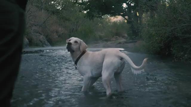 河里跑向镜头的狗狗视频