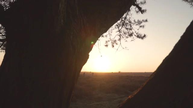 大树剪影看到太阳光视频素材