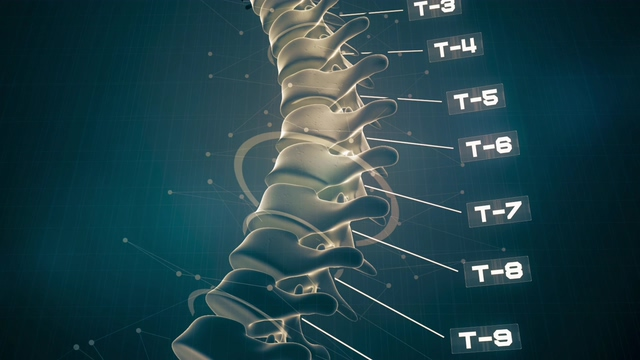 4K骨骼动画脊椎视频