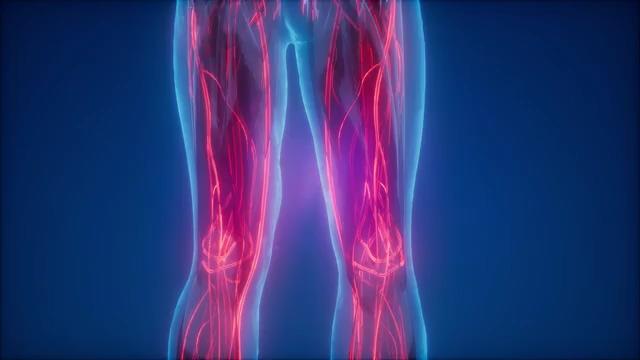人体骨骼静脉免费视频