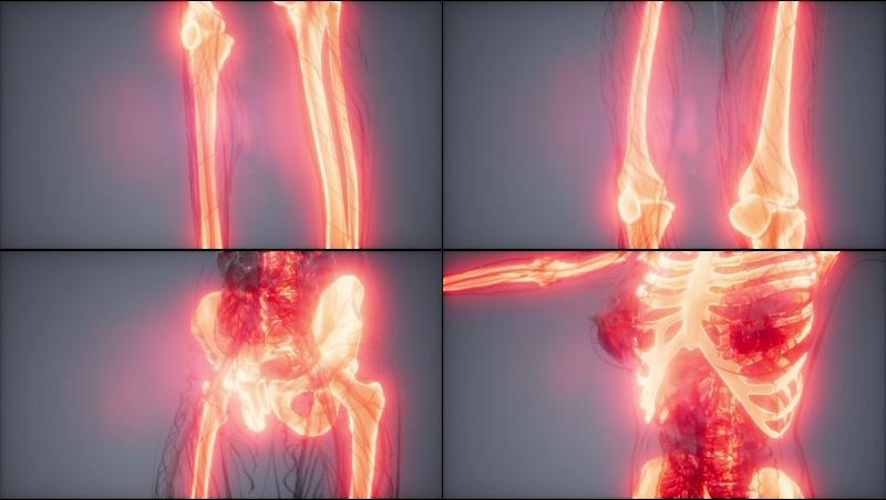 女性人体骨骼解剖动画视频