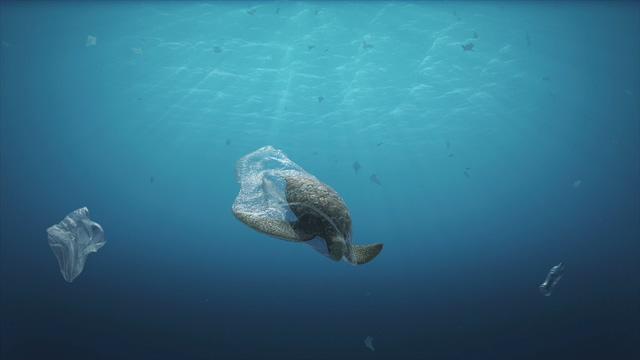 4K海洋污染被塑料袋套住的乌龟视频