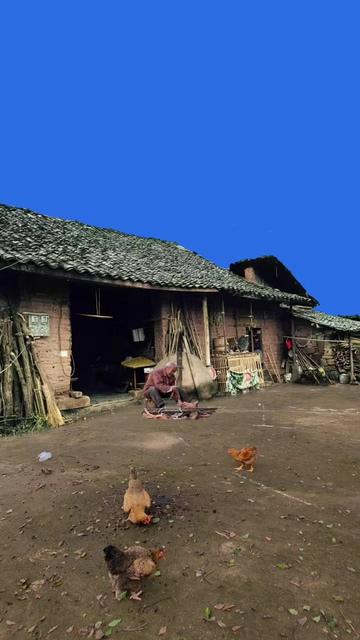 农村院子里的鸡和老爷爷在砍柴视频