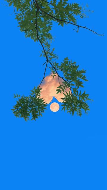 手机壁纸树枝和心形的云彩视频