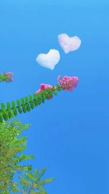 动态壁纸_树枝后面的两朵心形云彩竖屏视频