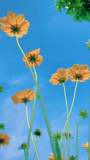 手机视频壁纸一朵黄色的花竖屏视频
